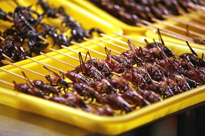 food-as-insects-22